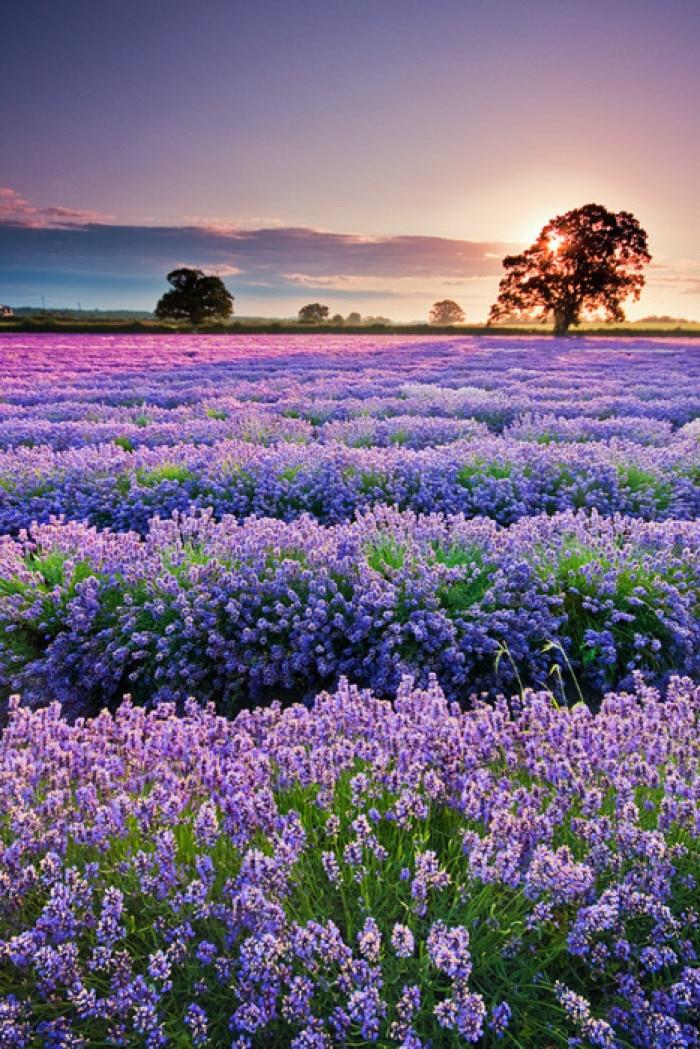 Blanket Comfort Warmth Soft Plush Easy Care Machine Wash Beautiful Purple Flowers Sofa Bed Throw Kid