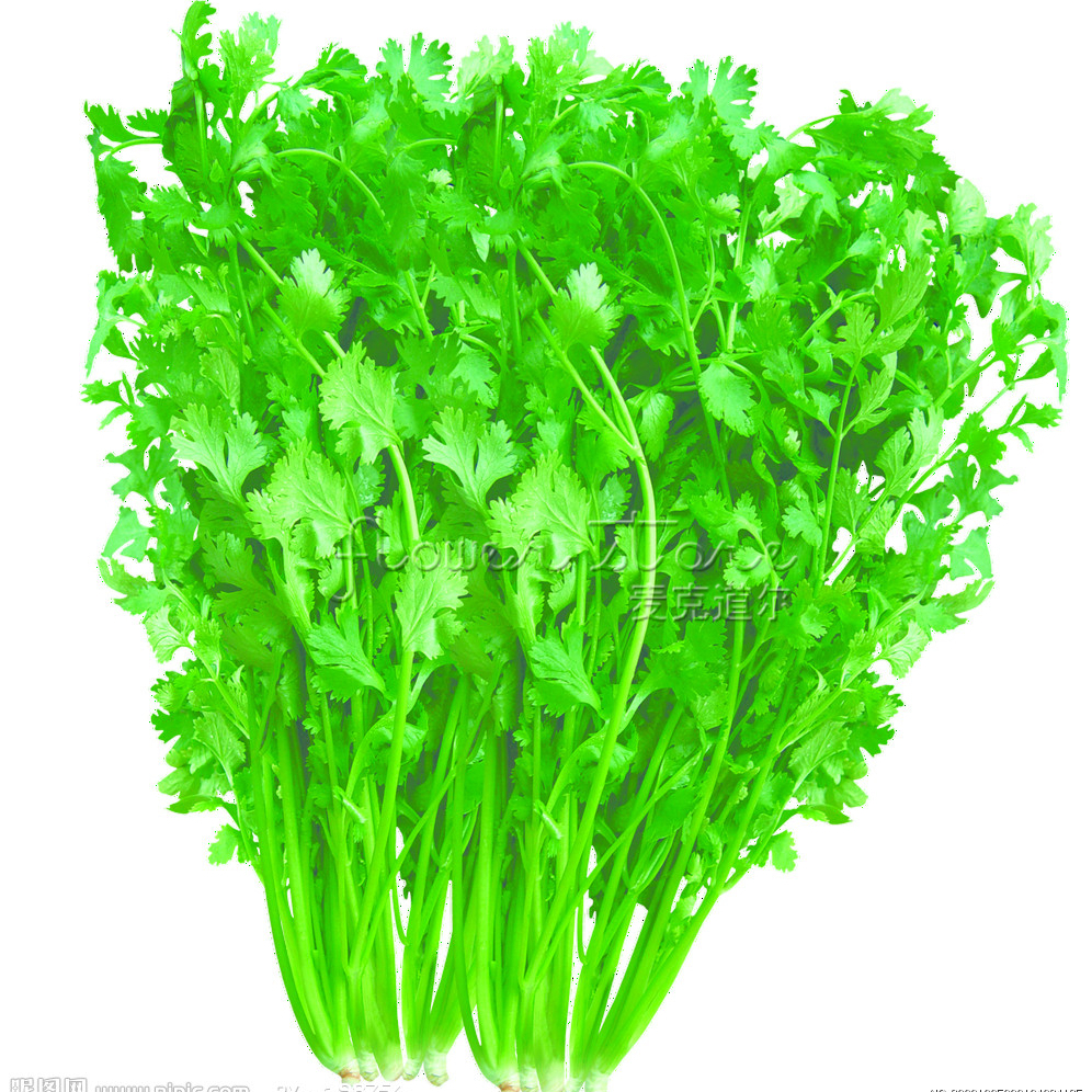 Online buy wholesale cilantro herbs from china cilantro for Cheap garden plants