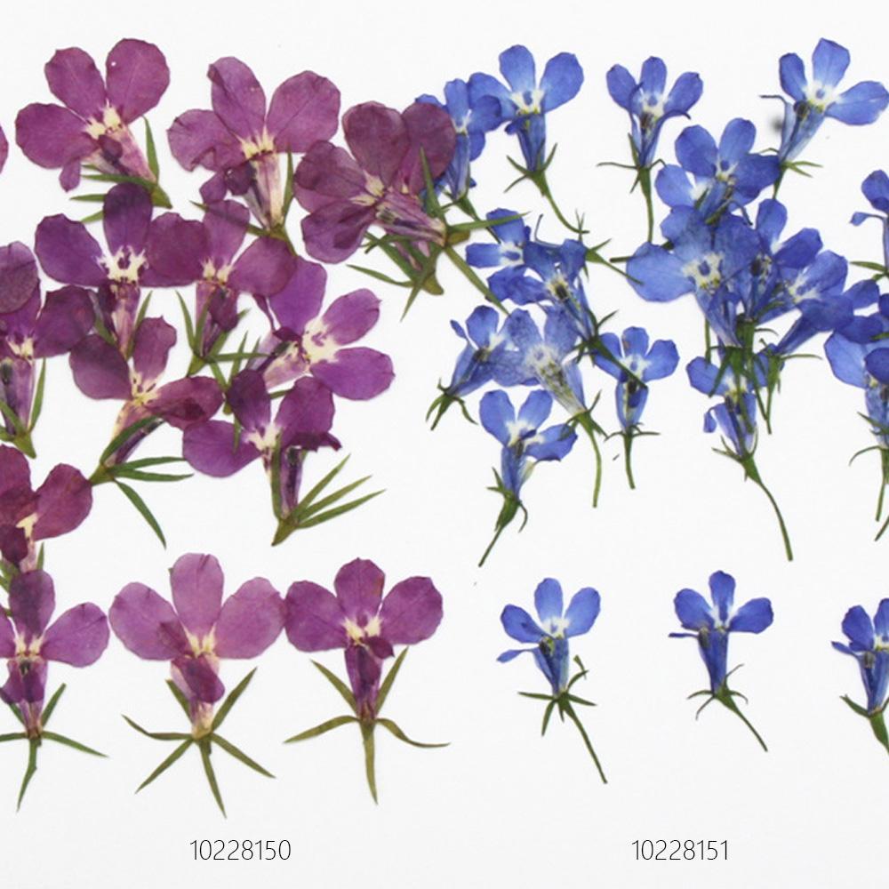 Лобелия erinus натуральных сухих цветок нажал гербарий цветок diy Цепочки и ожерелья 12 шт.