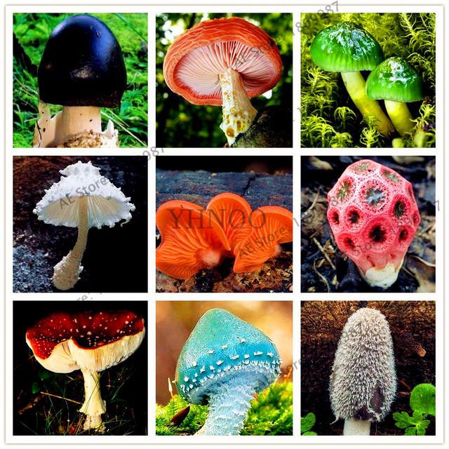 Cutie Edible Mushroom Bonsai Seeds (500 Pieces)