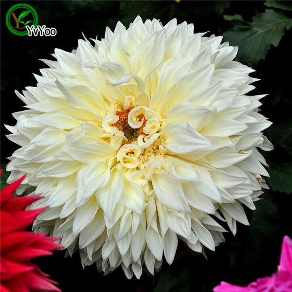 Popular Large White Flower Pots Buy Cheap Large White