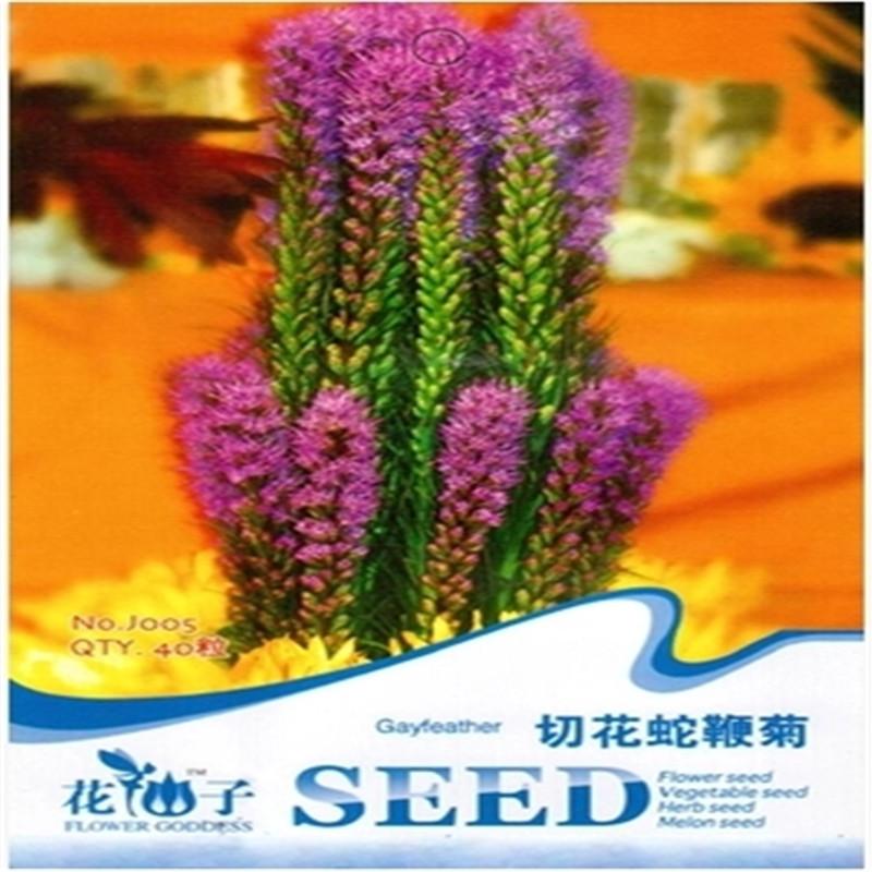 hada hermosa serpiente ltigos de corte crisantemo semilla resistente resistente al calor de flores secas de