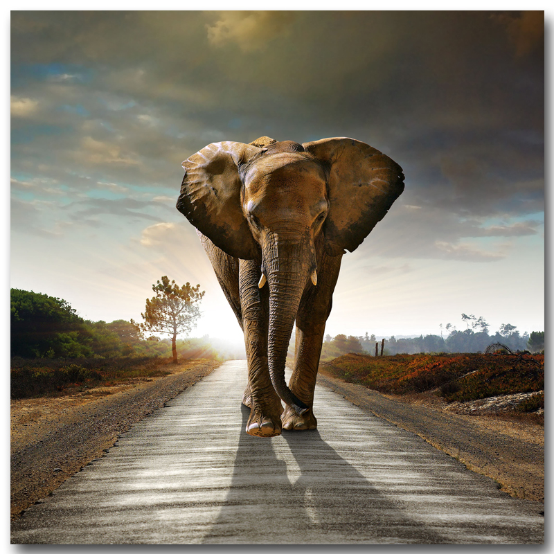 2017 Canvas Painting Pictures High Quality Hd Cheap Price Great Art African Elephant Pictures Modular Modern Home Decor Unframed