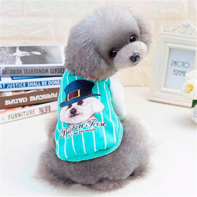22dd5dc44 Blue Puppy with Hat pet dog Jacket coat clothes Bichon Frise Puppy ...