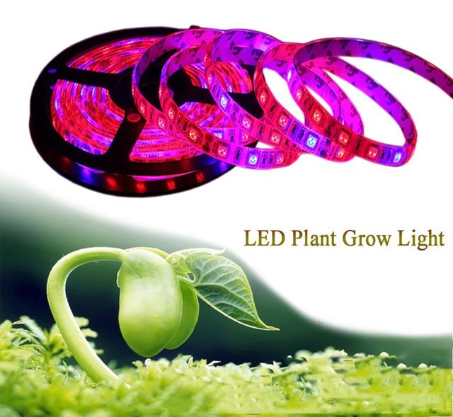Luces de cultivo de plantas 5m a prueba de agua espectro completo LED tira flor phyto lámpara rojo azul 4:1 para invernadero hidropónico + adaptador de corriente