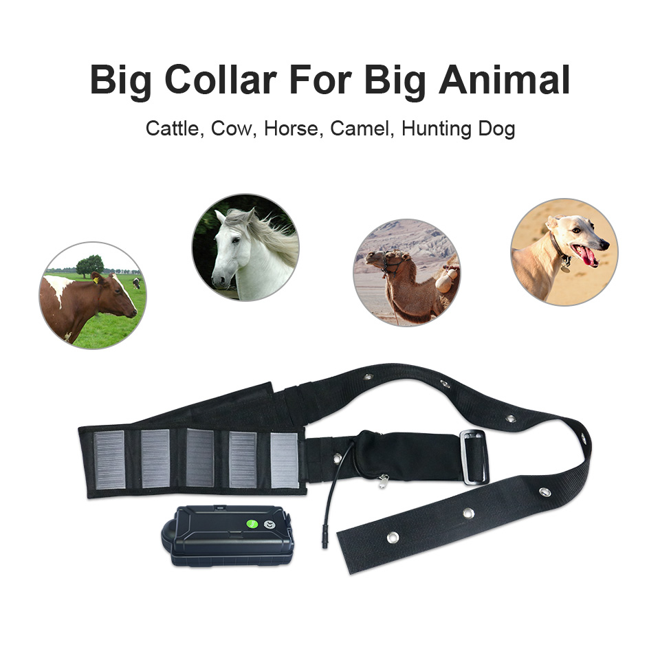 3G 2G 4G Big Battery Power Solar Panel Collar Cow GPS Tracker For Cattle  Horse Camel Big Hunting Dog Animal