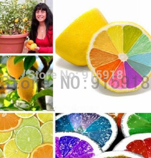 rare rainbow lemon seeds organic fruit lemon tree see X