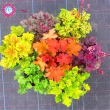 100 pezzi semi di Heuchera micrantha arcobaleno foglia pianta colorato foglia di erba semi di cole bonsai semi di fiori piante resistenti al freddo