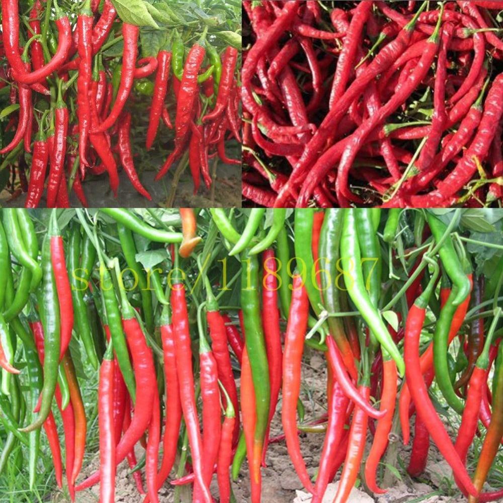 1bag=100pcs pepper chili seeds hot Vegetable seeds Gian