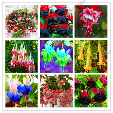 Loss Promotion!Purple Double Petals Fuchsia flores Bonsai Potted Flower plantas Indoor Plants Flowers For Home Garden Decoration(China)