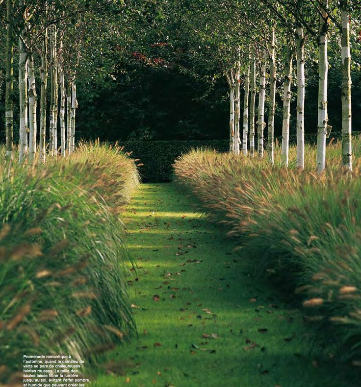 Popular grass type buy cheap grass type lots from china for Easy ornamental grasses