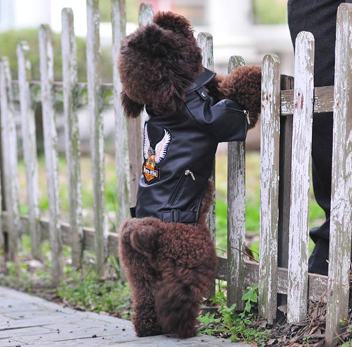 GeïMporteerd Uit Het Buitenland Kleine/medium Hond Pet Luxe Lederen Jas Jassen Voor Hond Herfst/winter Adelaar Chihuahua Hond Kat Puppy Vest Kleding Kostuum