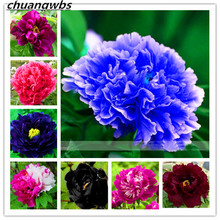 Peony flower peony plants Chinese rose beautiful bonsai plant potted tree for home garden 10pcs/bag