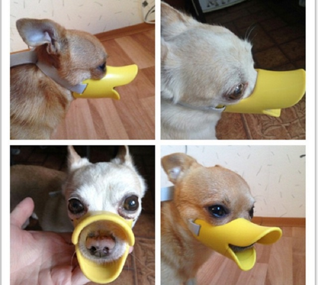 FG63 Silicone Pet dog Mask Muzzle duck mouth Adjustable design dog muzzle Anti Bark Bite Chew Puppy dog Training Products
