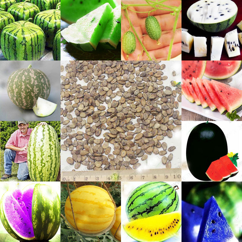 12 Kinds Rare Chinese Watermelon Seeds Can to be Choo X