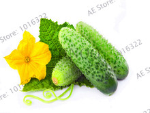 Best-Selling!100 pcs cucumber seeds japanese mini cucumber vegetable seeds organic NO-GMO seeds for home garden,#2ZT5O8
