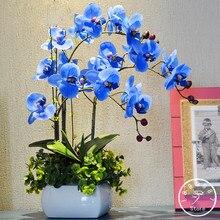 Sale!Rare Bonsai Flower Blue Butterfly Orchid plant Beautiful Garden Phalaenopsis Orchids flores-200 PCS/Pack,#KAZ26D