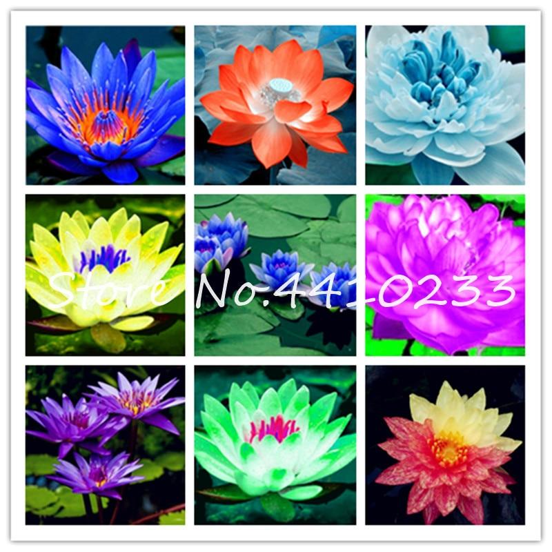 ZLKING 300 Pcs Moss Seed Flower Seeds Bonsai Plants Free Shipping No TAX NEW S U