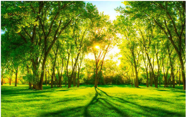 Us 15 65 49 Off Custom Murals Photo 3d Wallpaper Non Woven Mural Nature Scenery Sunshine Green Trees Painting 3d Wall Room Wallpaper Designs In