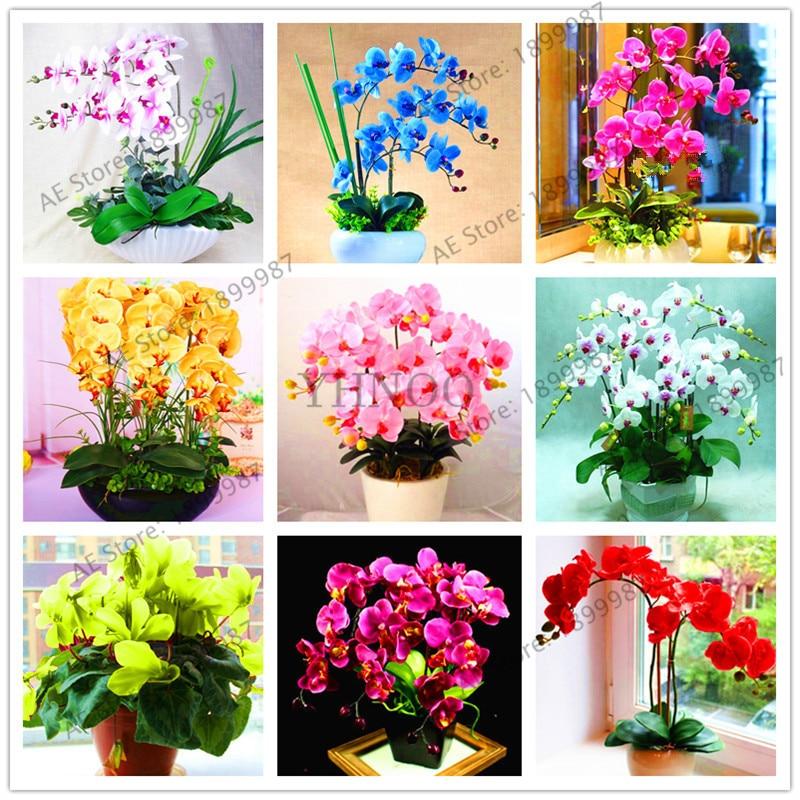 Фаленопсис семейство орхидные Крытый настольные цветы при цветении, бабочка Орхидея bonsailings около 100 шт./пакет.