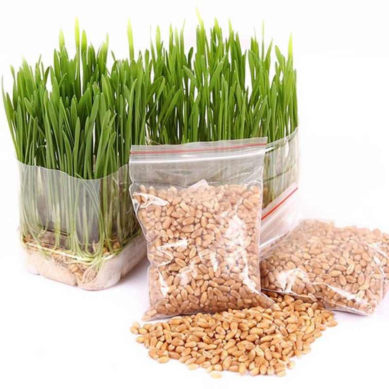Lots Seeds 800/1600pcs Harvested Cat Grass Organic Bonsai With Growing Guide Seeds