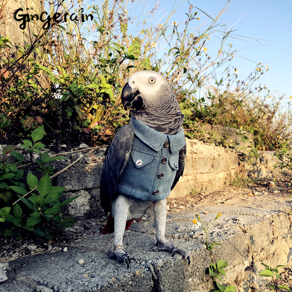 Gingerain Bird Clothes Parrot Clothes Motorcycle Youth Original Hand-made Custom Bird Clothes Motorcycle Youth