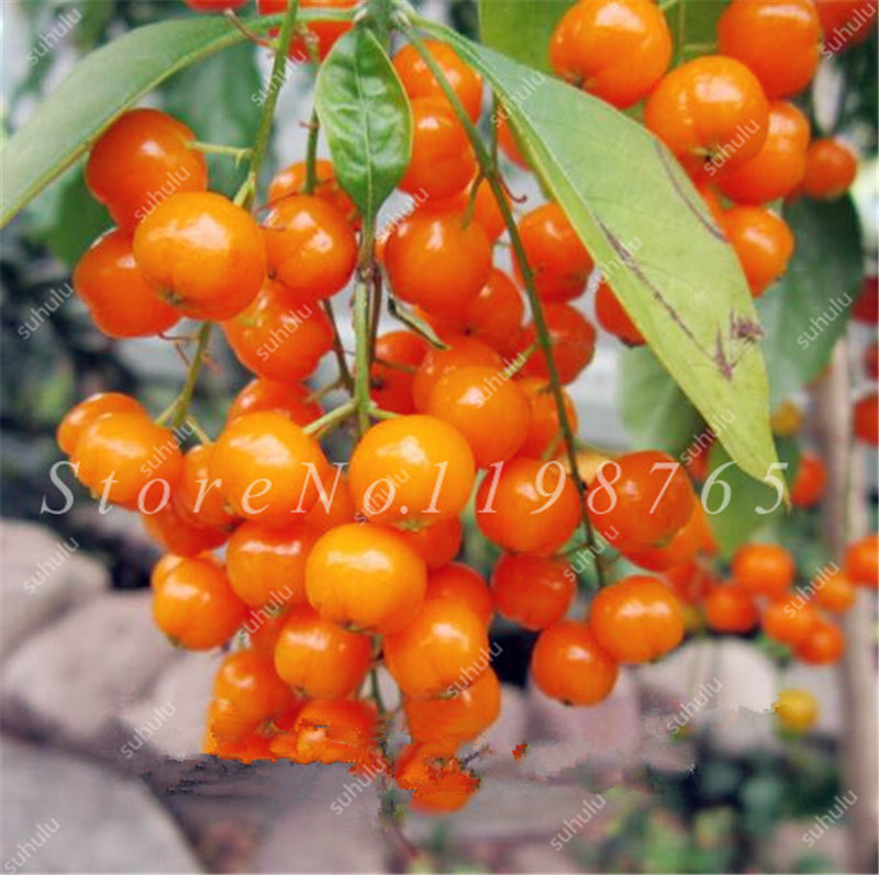 Big Promotion ! 30 Pcs Edible Oranges Fruit Bonsai Tree Seeds Citrus Pots Plants Mini Garden Mandarin Orange Seeds Sementes