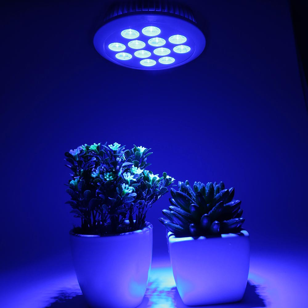 Full Blue E27 36W LED Grow Plant Light Bulb Fitolamp Hydroponics Phyto Lamp For Plants Flowers Seedlings Greenhouse Indoor Veg