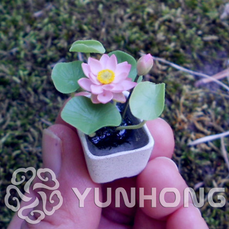 10PCS Mini Lotus ,Aquatic Plants Flower Bonsa, Diy Potted Plants, Indoor  Outdoor Pot Plant Germination Rate Of 95% Mixed Colors