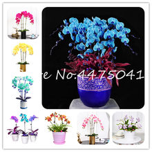 100 Pcs/Pack Unique Colorful Phalaenopsis Orchid Flower Bonsai Adorable Butterfly Orchid Flower Sky Blue Plant Garden Potted Pla(China)