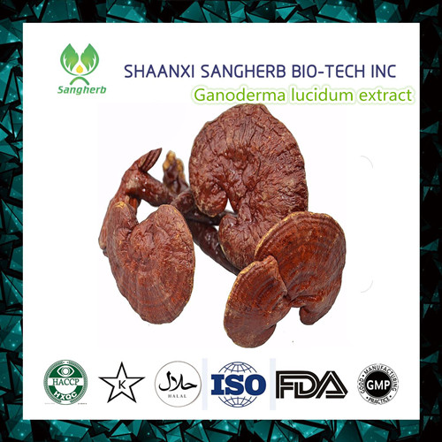 1kg Dried Lingzhi Reishi Mushrooms Ganoderma Lucidum Chinese Wild Anti-cancer Improve Immunity Free shipping 1 bottle free shipping aloe softgel soft capsule improve the immunity