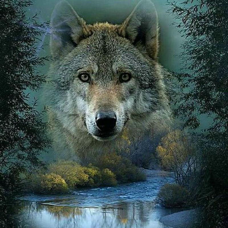 Картинки с одиноким волком