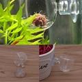 Hogar Paradise Better 1pc Glass Pot Plant Kerf Cup Holder Shrimp Aquarium Fish Tank Aquatic Feeder New