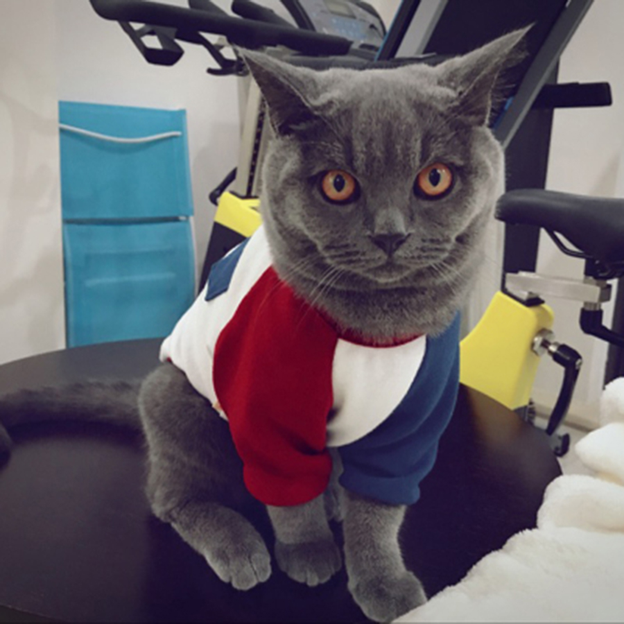 Cat Outfit  Kitten Clothes Christmas Spring/Summer Fashion Hoodie Costume Cute 50MYF041