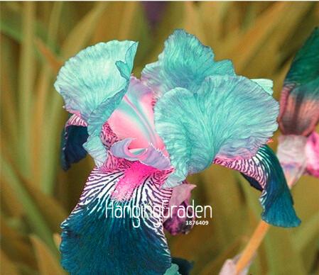 vivaces jardin fleurs-achetez des lots à petit prix vivaces jardin