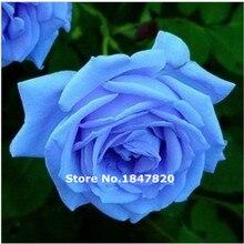 100 шт. Китай Редкие голубой розы семена, Красивый Цветок радуги выросли семян растения Бонсай Семена для дома и сада