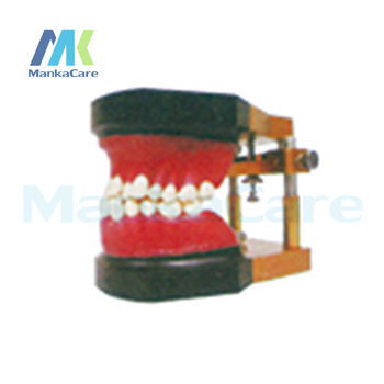 Manka Care -  Typodout Model/Consist of wax form,teeth model and typodont occluder,can meet any typodont practice requirements