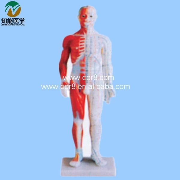 BIX-Y1005 Acupuncture Manikin (Standrd ) 60CM G064 bix y1001 archaize acupuncture copper manikin antique bronze g038