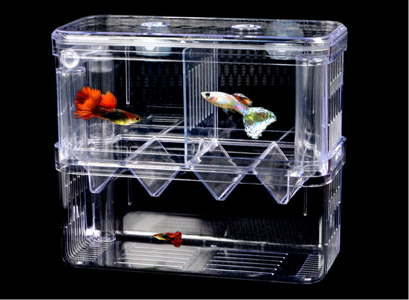 2 room hatch box suspend aquarium arcylic guppy baby small for 2 box auto indipendenti