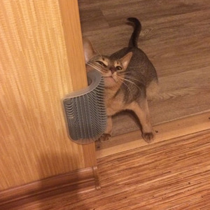 Pet Comb Removable Cat Corner