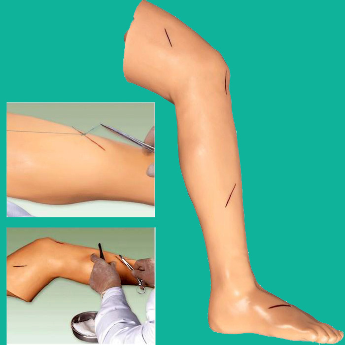 все цены на Advanced Suture Practice Leg, Surgical Suture Leg training model онлайн