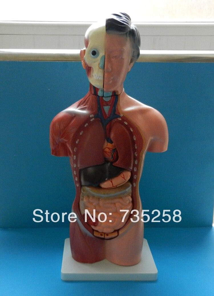 Vistoso Torso De La Mujer Anatomía Regalo - Imágenes de Anatomía ...