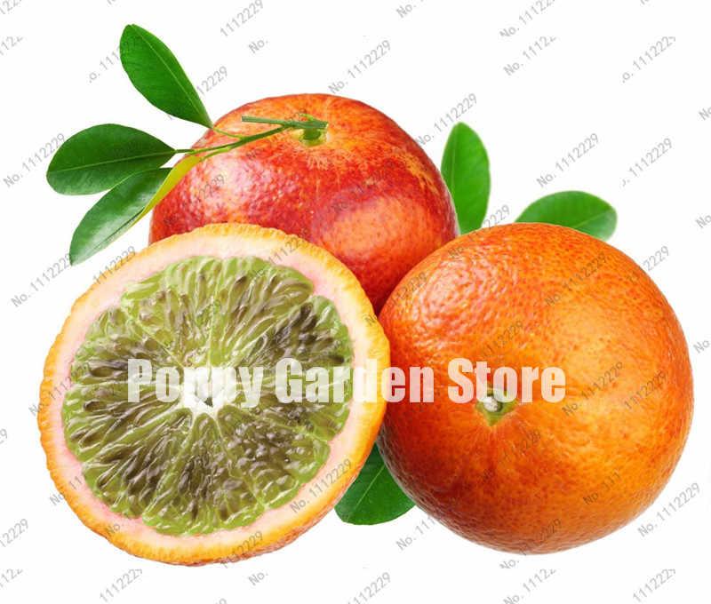 30 pcs Anã Laranja Mix Bonsai Melão Bonsai Árvore de Fruto Comestível Orgânico de Alta Taxa de Sobrevivência de Plantas Cítricas Alimentos Saudáveis Em Casa jardim