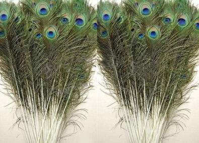 50pcs Pack Beautiful Natural Peacock Tail Feathers 25 30cm
