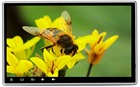 2DIN 10.1 INCH Andro...