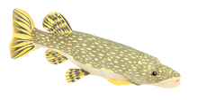 large 80cm simulation Pikes,Amur pikc fish plush toy, soft throw pillow toy birthday gift h2972