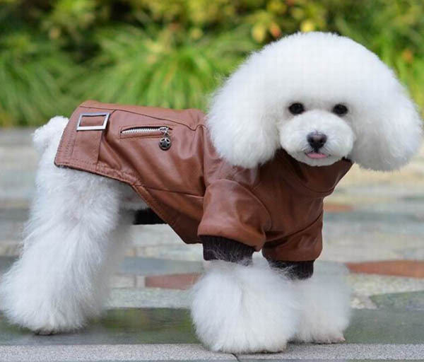 1pcs pet dog cat cool fashion jackets doggy leather sweaters puppy coats apparel dogs cats hoodies clothes pets products XS-XL