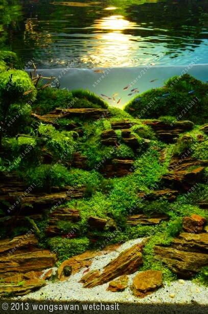 яванский мох живой на алиэкспресс