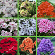 Rare 24 different colors US phlox flowers potted bonsai seeds home garden 100PCS