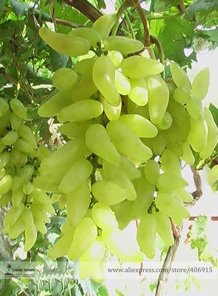 Online buy wholesale grape plants from china grape plants for Cheap garden plants